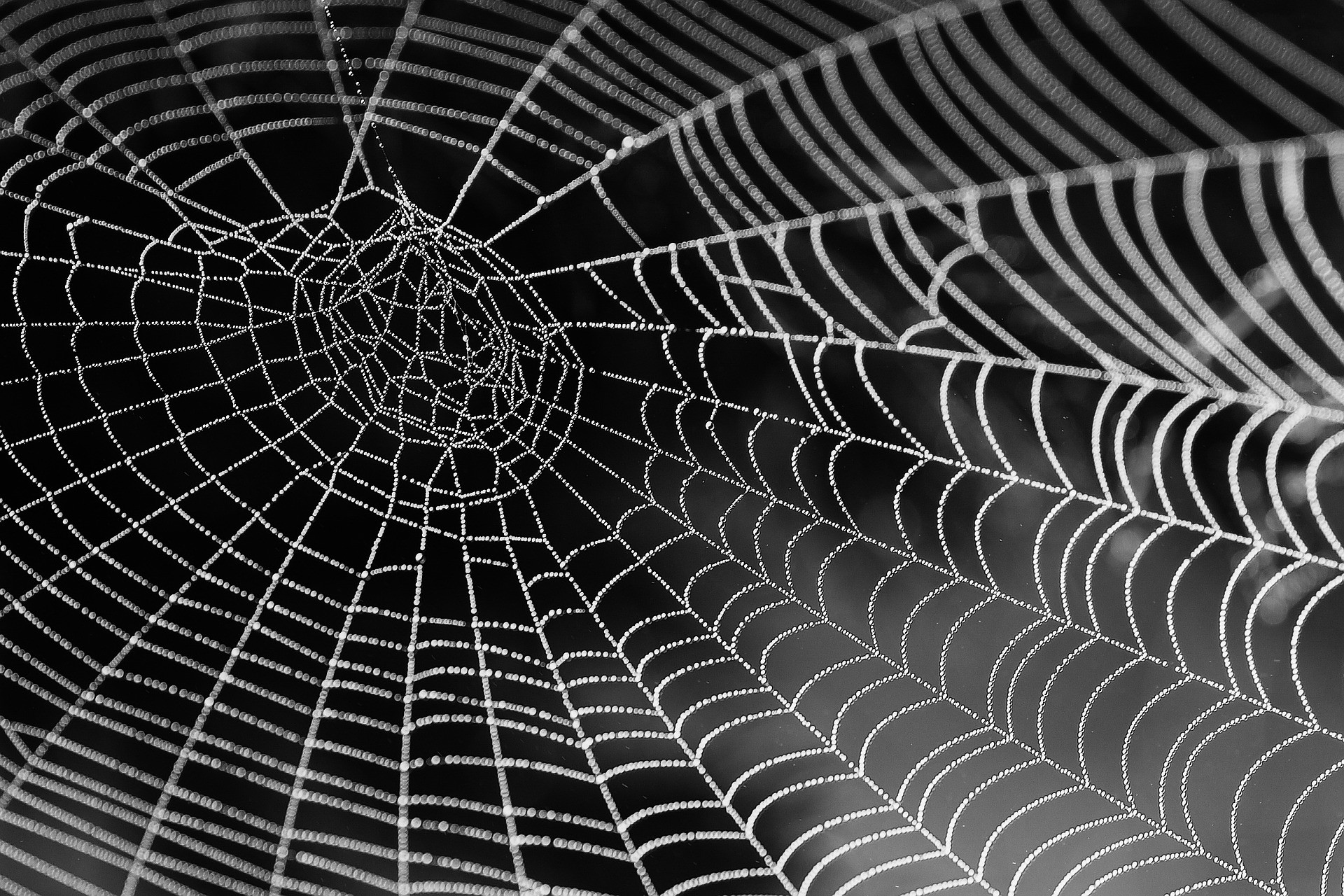 Jak se zbavit pavouků? Existuje přírodní pomoc – Napadov.cz
